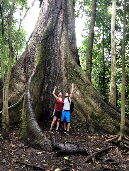 Ceiba Tree, Arenal Volcano National Park. March 2019