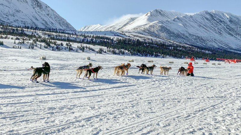 The 2020 Iditarod Race in Alaska
