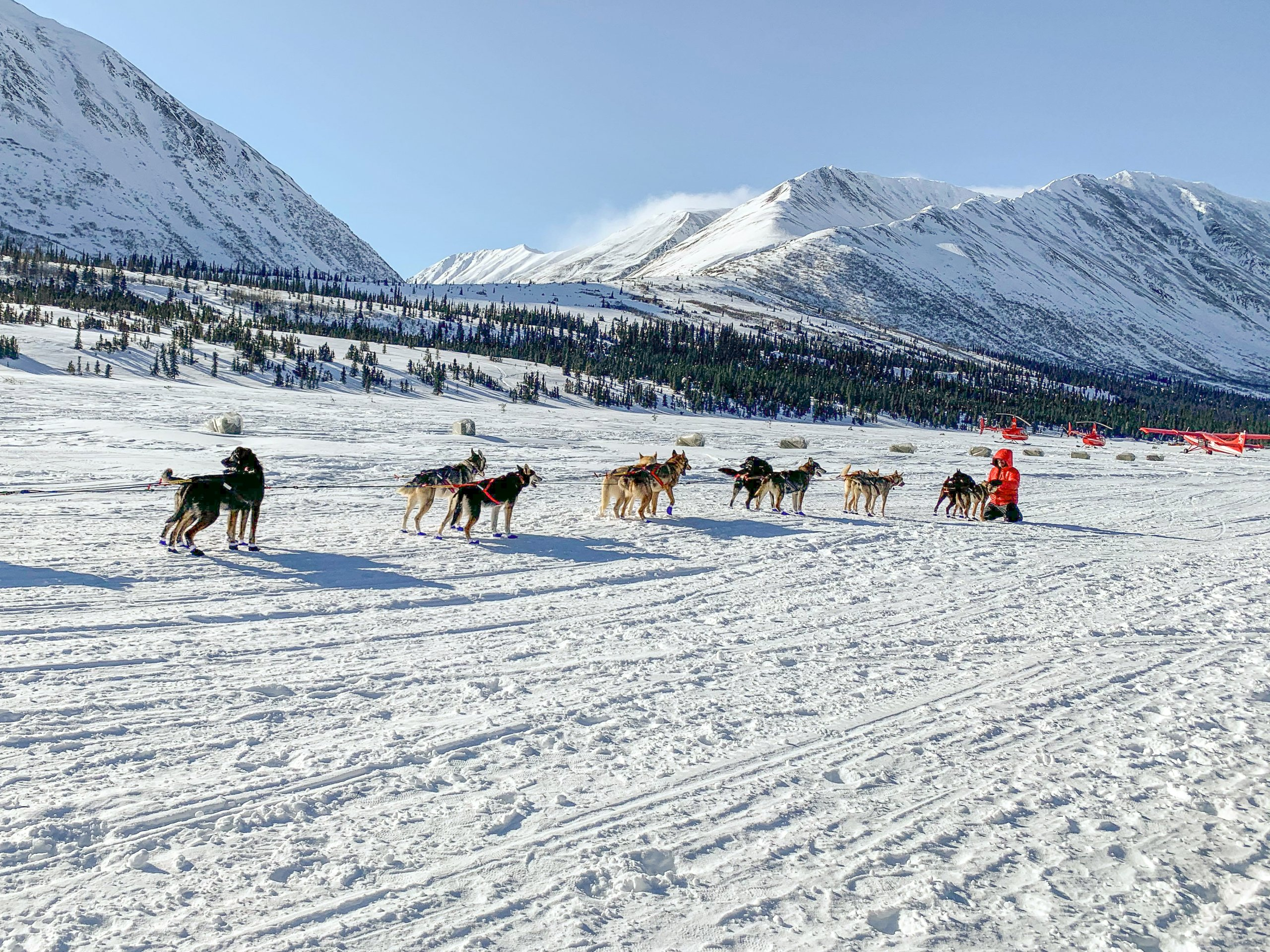 The 2020 Iditarod Dog Sled Race in Alaska
